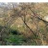 на продажу земельный участок в Батуми с видом на город и море