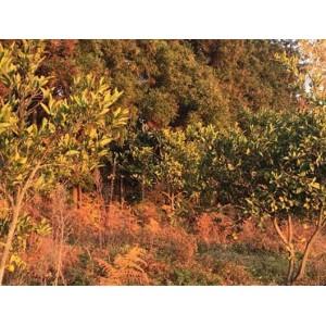 Купить большой земельный участок недалеко в Кобулети, Батуми