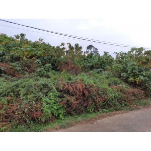 Земельный участок в деревне Ахалсопели, Батуми