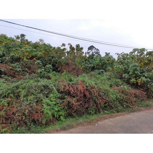 Земельный участок в Батуми. Продажа