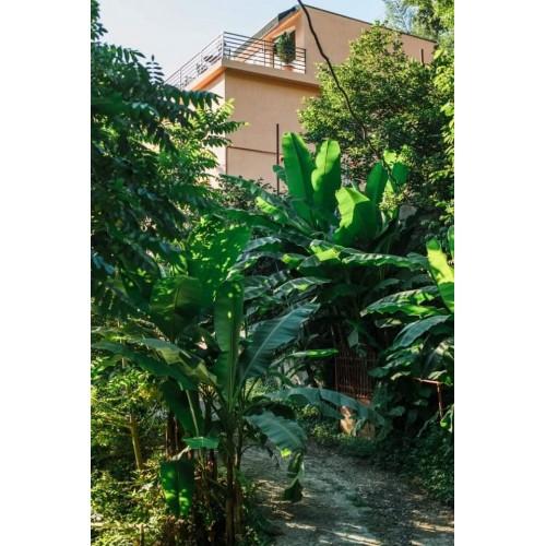 продается 3- этажный дом с земельным  участком под гостиницу с видом на море и Батуми