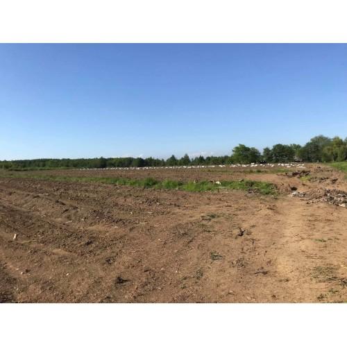 Продажа большого земельного участка в Гурии недалеко от Батуми