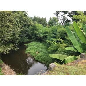 Земельный участок у речки в Кобулети, недалеко от Батуми