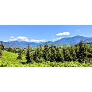 Купить земельный участок в Чакви, недалеко от Батуми