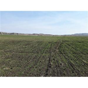 Продается большой земельный участок в Бодбе, недалеко от Сигнаги, Кахетия