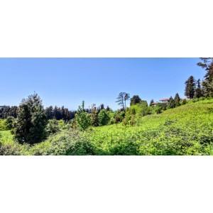 Купить большой земельный участок в Батуми