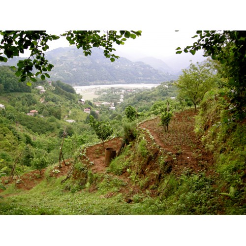 Продается земельный участок в деревне Тхилнари недалеко от Батуми