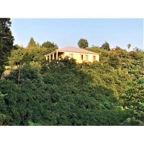 Купить большой земельный участок недалеко от Батуми