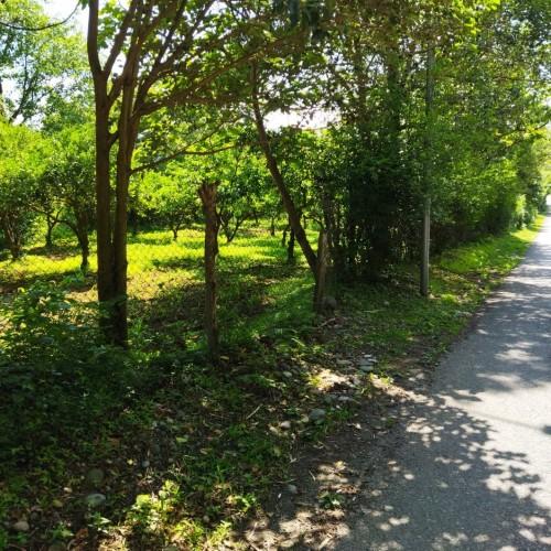 Земельный участок в Чарнали недалеко от Батуми