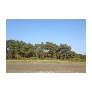 Земельный участок у моря недалеко от Батуми